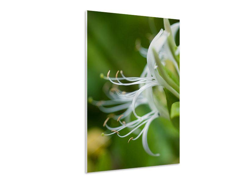 Hartschaumbild Makro Blüte