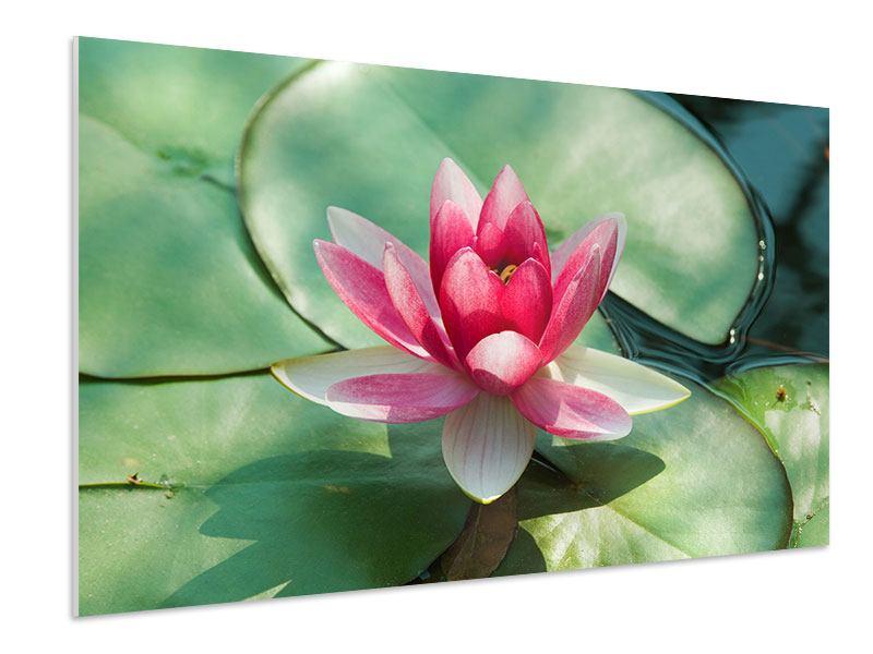 Hartschaumbild Der Frosch und das Lotusblatt