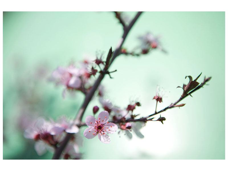 Hartschaumbild Die japanische Kirschblüte