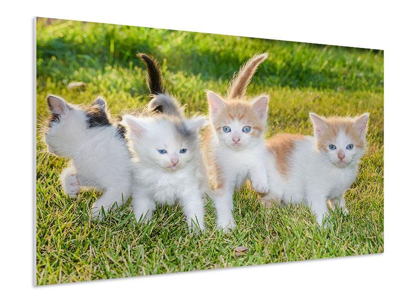 Hartschaumbild Katzenbabys