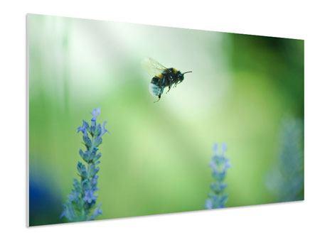 Hartschaumbild Die Biene
