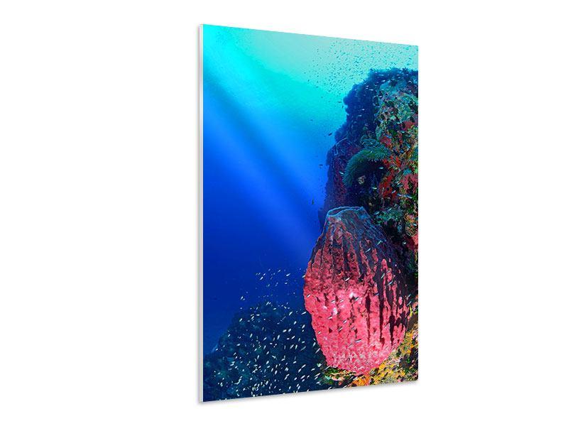 Hartschaumbild Unterwasserwelt