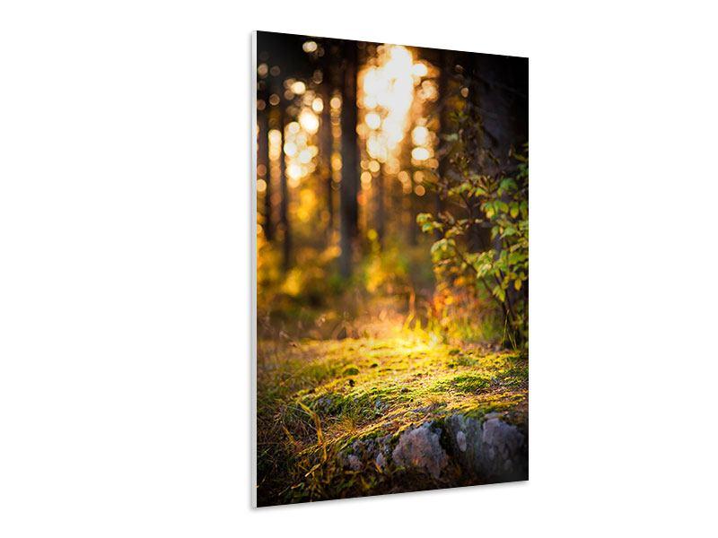 Hartschaumbild Der Wald im Hintergrund