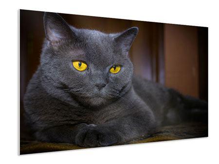 Hartschaumbild Katzengöttin