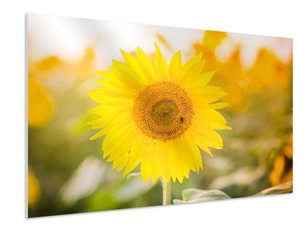 Hartschaumbild Sunflower