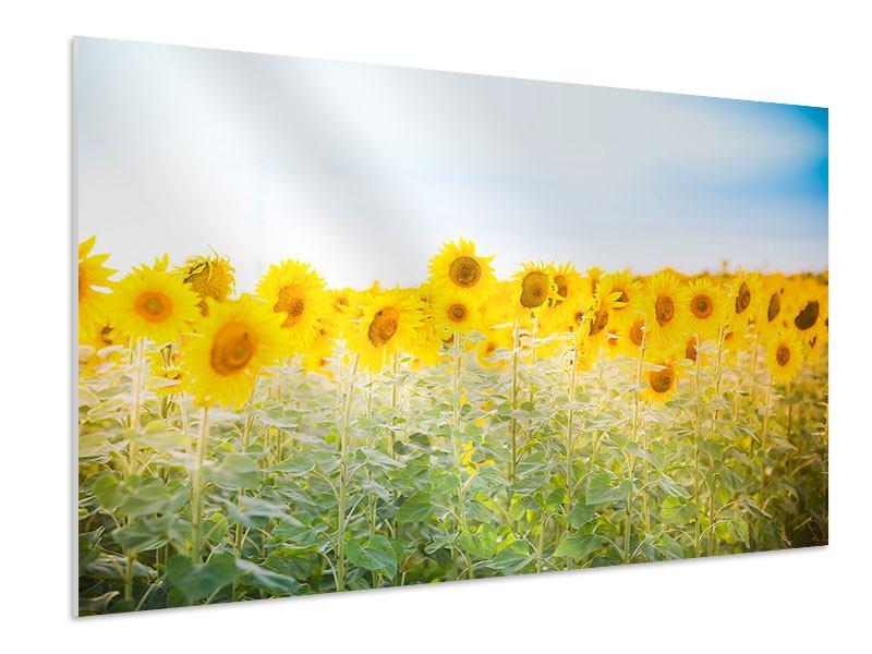 Hartschaumbild Im Sonnenblumenfeld