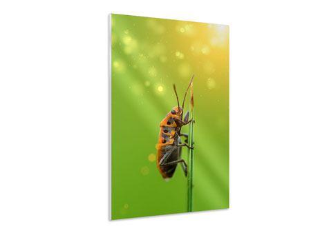 Hartschaumbild Das Insekt
