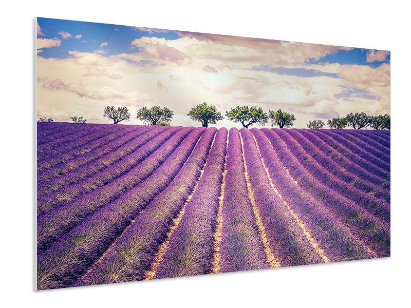 Hartschaumbild Das Lavendelfeld