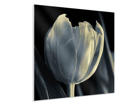 Hartschaumbild Schwarzweissfotografie XXL Tulpe