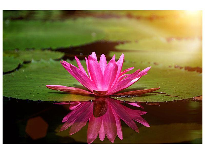 Hartschaumbild Lotus im Wasser