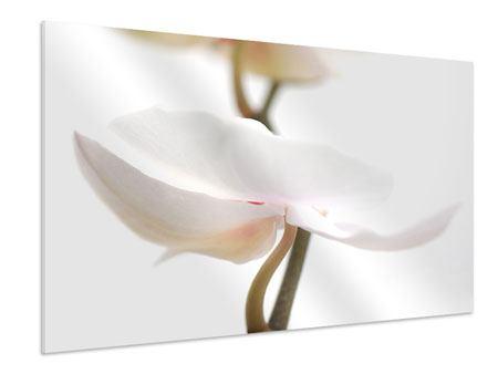 Hartschaumbild XXL Orchideenblüte