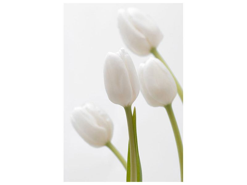 Hartschaumbild Weisse Tulpen