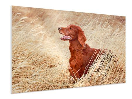 Hartschaumbild Irish Red Setter