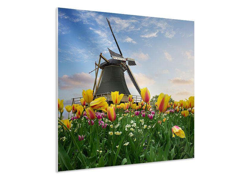 Hartschaumbild Die Windmühle mit den Tulpen