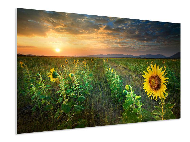 Hartschaumbild Sonnenblumenfeld im Abendrot
