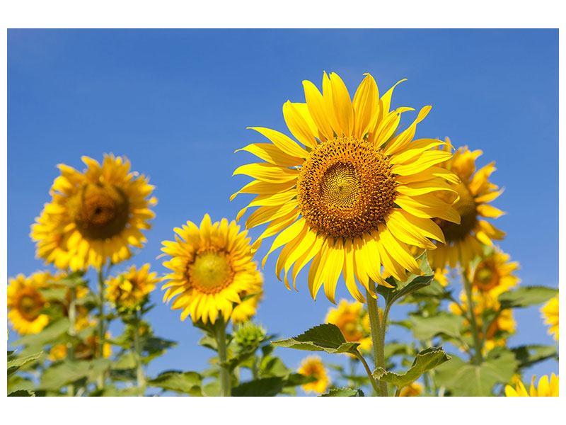 Hartschaumbild Himmlische Sonnenblumen