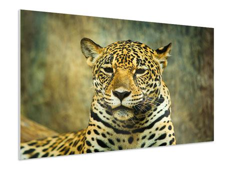 Hartschaumbild Pantherportrait