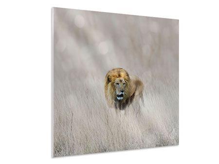Hartschaumbild Der Löwe