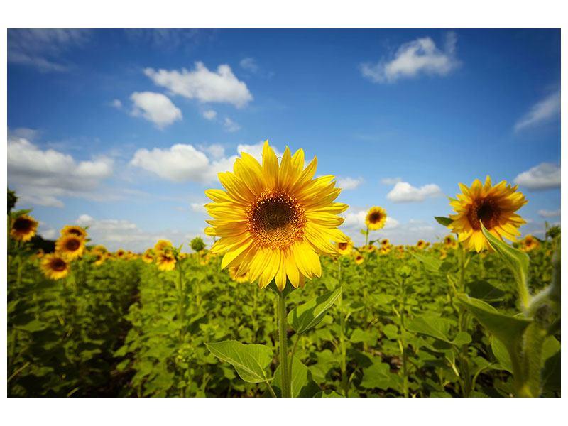 Hartschaumbild Sommer-Sonnenblumen