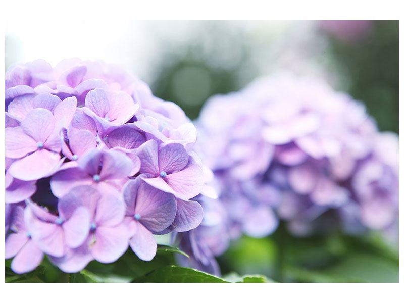 Hartschaumbild Hortensien