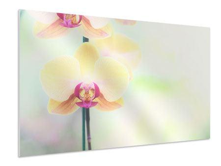 Hartschaumbild Lovely Orchidee