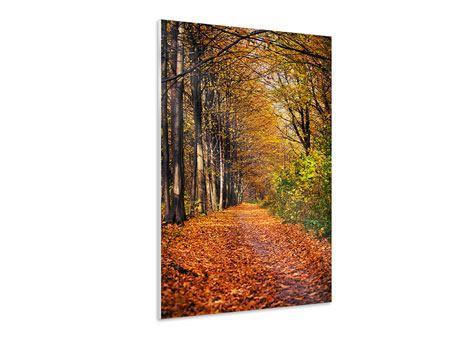 Hartschaumbild Laubwald im Herbstlicht