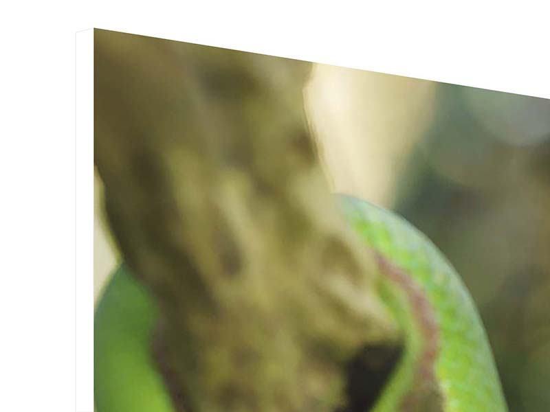 Hartschaumbild Grüner Baumpython