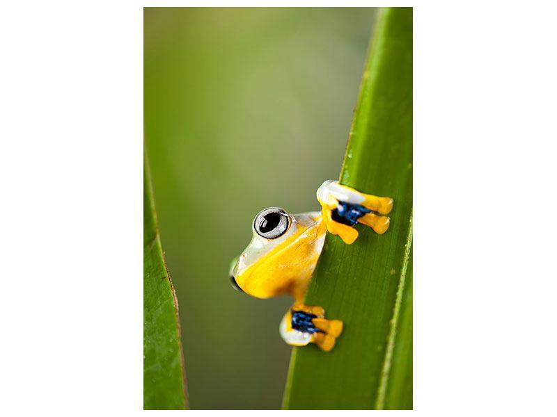 Hartschaumbild Frosch