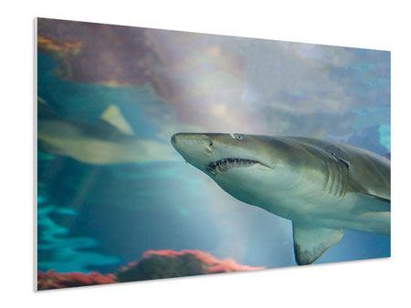 Hartschaumbild Hai