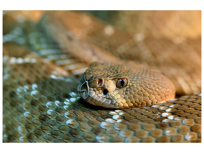 Hartschaumbild Viper