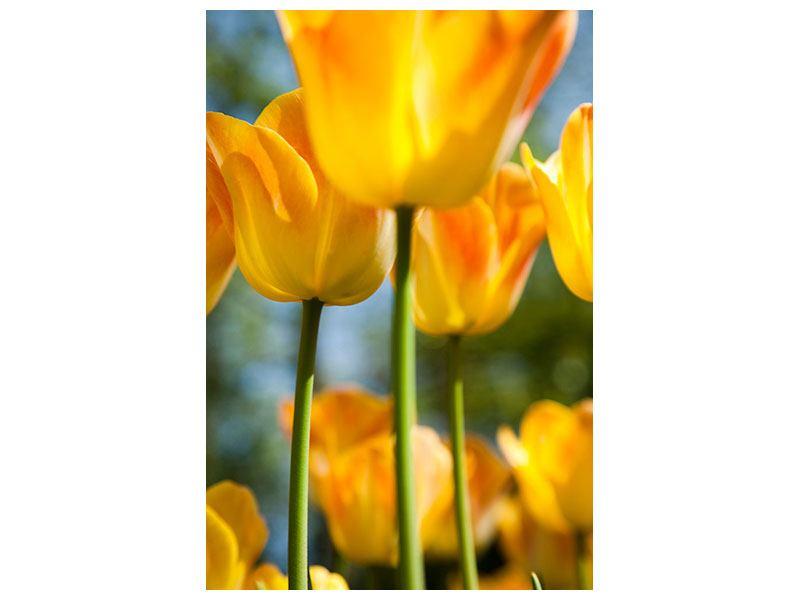 Hartschaumbild Im Tulpenbeet