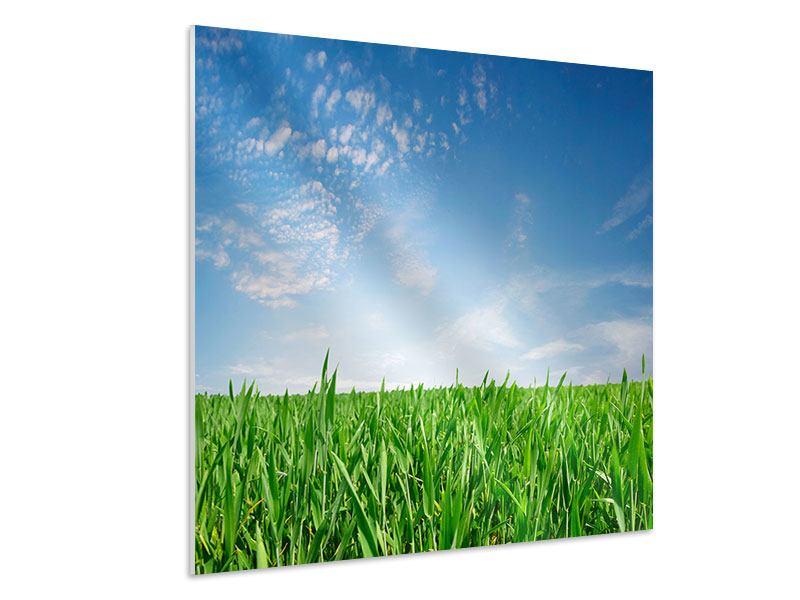 Hartschaumbild Das Gras