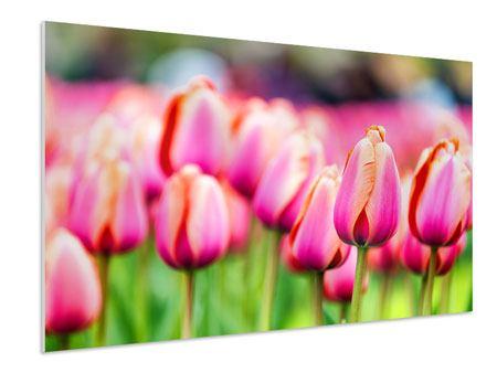 Hartschaumbild Pretty in Pink