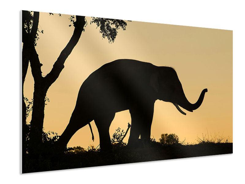 Hartschaumbild Elefant an der Wand