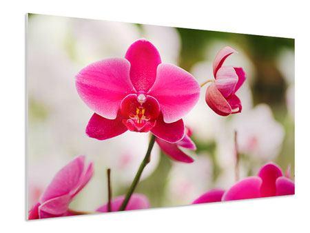 Hartschaumbild Perspektivische Orchideen