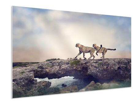 Hartschaumbild Zwei Geparden