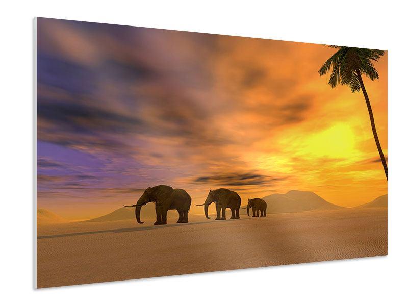 Hartschaumbild Wüstenelefanten