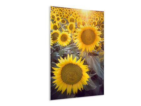 Hartschaumbild Die Sonnenblumenperspektive