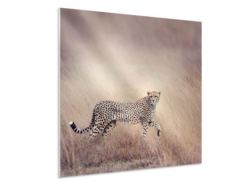 Hartschaumbild Gepard