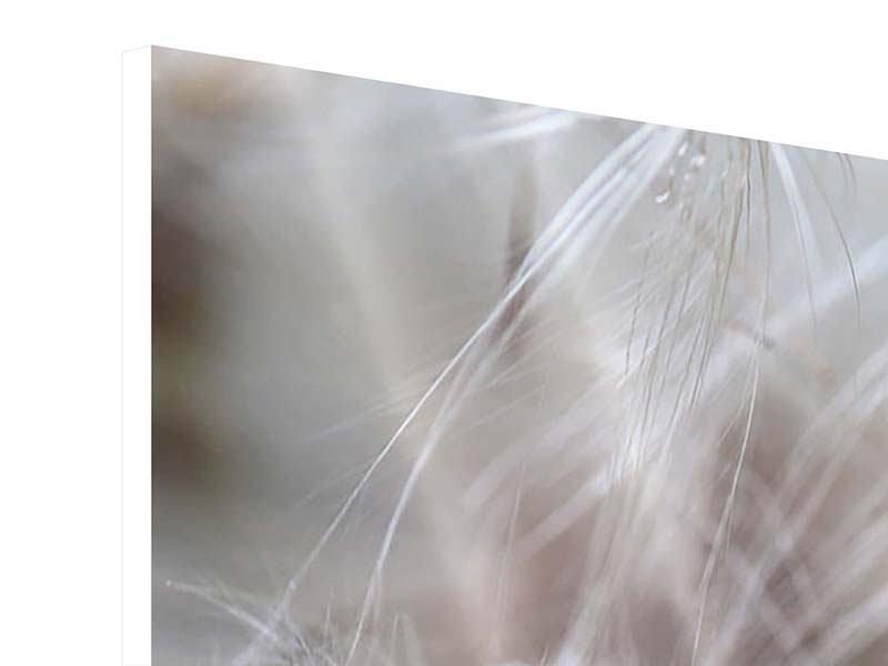 Hartschaumbild Close up Blütenfasern