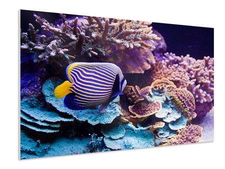 Hartschaumbild Faszination Unterwasser