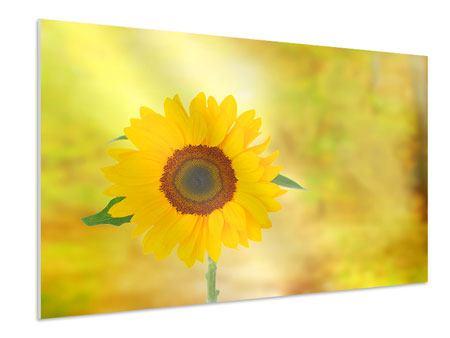 Hartschaumbild Die Sonnenblume