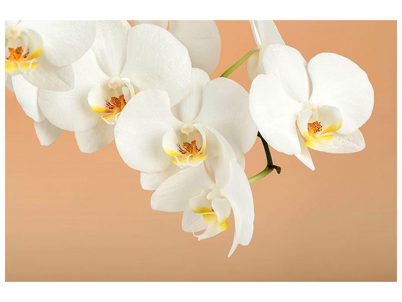 Hartschaumbild Weisse Orchideenblüten