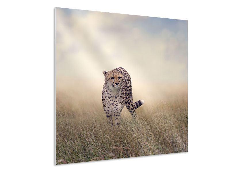 Hartschaumbild Der Gepard