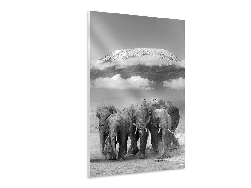 Hartschaumbild Elefantenherde