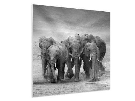 Hartschaumbild Die Elefanten