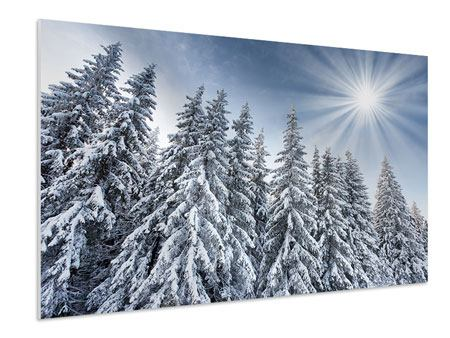Hartschaumbild Wintertannen