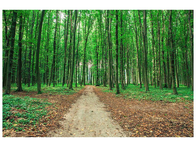 Hartschaumbild Tannenwald