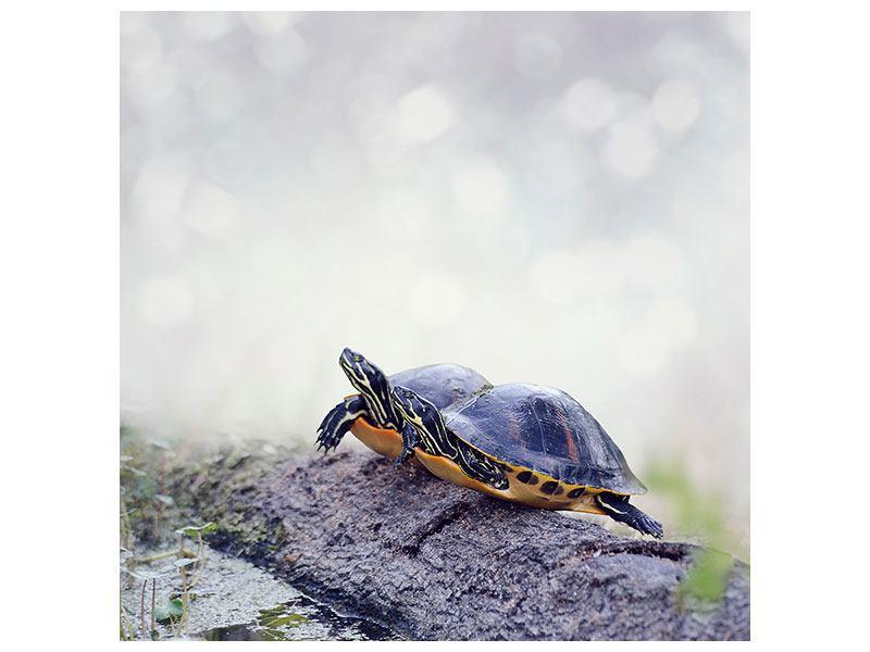 Hartschaumbild Schildkrötenpaar