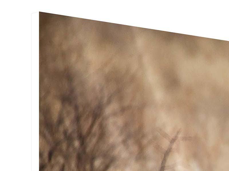 Hartschaumbild Eleganter Gepard
